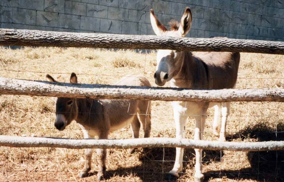 donkeys in pen