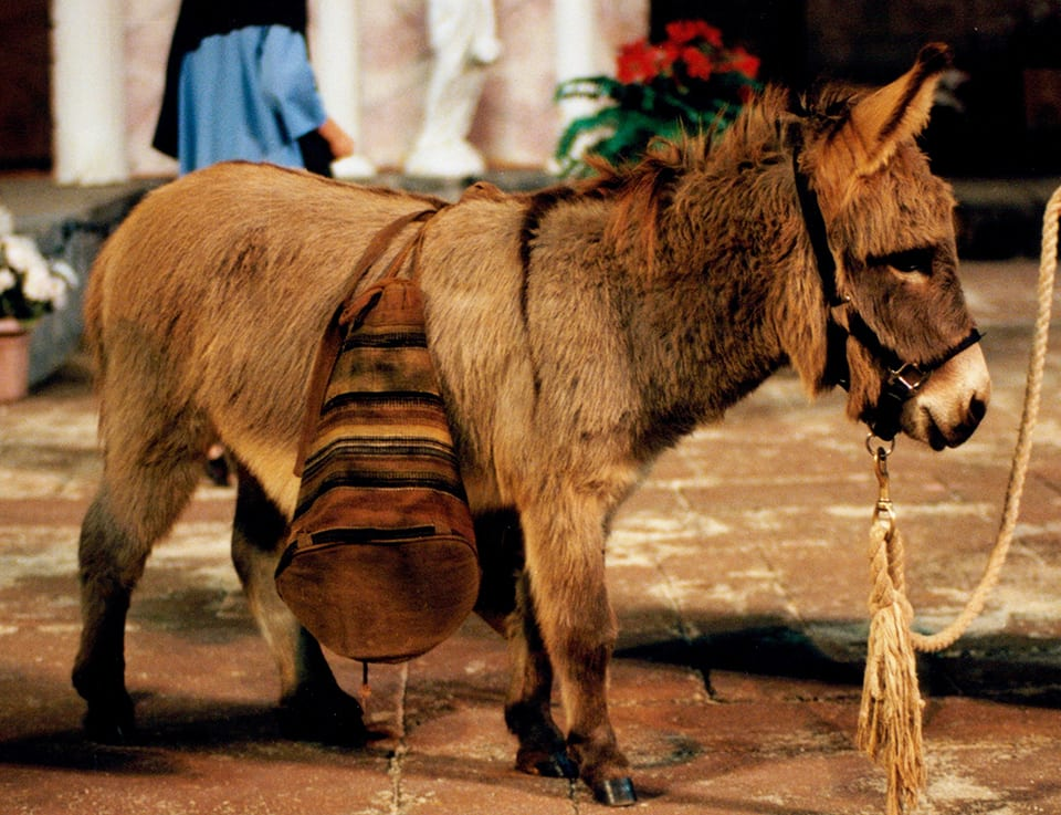 donkey with saddlebags