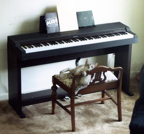 electric piano  and cat